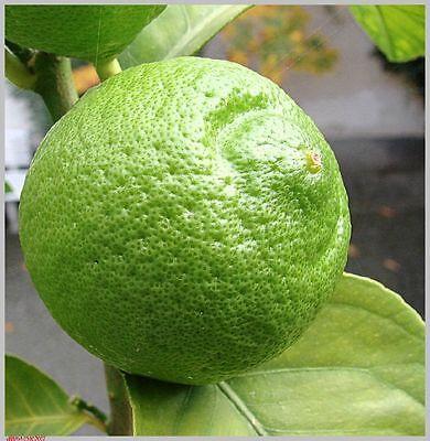 Aceite Esencial De Limón Verde - Lima Puro Y Natural 1 Litro
