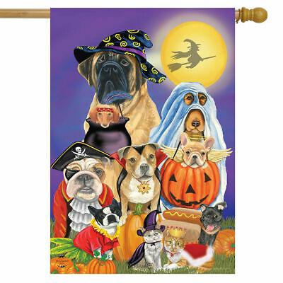 #82A CUTE TRICK TREAT HALLOWEEN DOGS CATS PUMPKINS HOUSE FLA