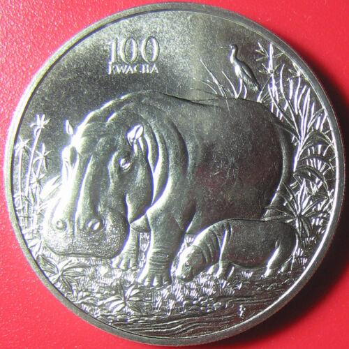 1998 ZAMBIA 100 KWACHA HIPPO HIPPOPOTAMUS CALF AFRICAN WILDLIFE CU-NI no silver