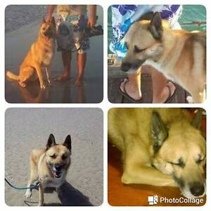 Lost Dog - Salisbury East Salisbury East Salisbury Area Preview