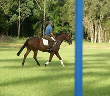 Talented Boy.... Jilliby Wyong Area Preview