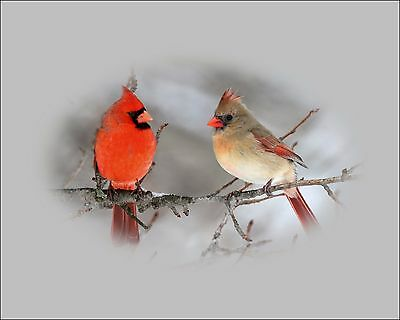 Gray Red Wall Decor Home Photo Art Bird Photography Cardinal Kitchen Bedroom Pic