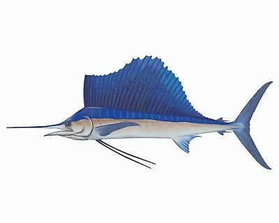 taxidermy sailfish mount trainers4me
