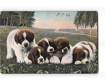 ST994: FIVE CUTE PUPPIES Circa 1906 postcard