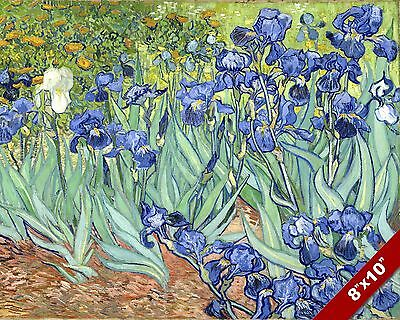 VINCENT VAN GOGH BLUE IRIS FLOWER BED FLORAL PAINTING ART REAL CANVAS PRINT