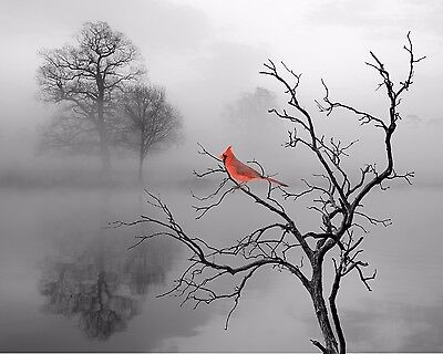 Red Gray Home Decor Cardinal Wall Art Bird Photo Print Bathroom Bedroom Picture