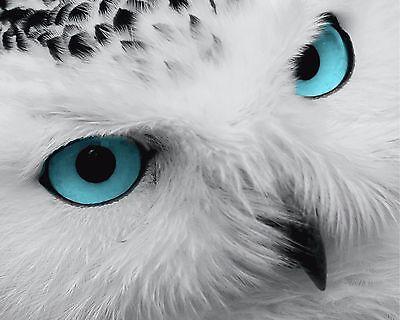 Teal White Gray Wall Art Photo Print Owl Blue Eyes Bird Decorative Home Decor