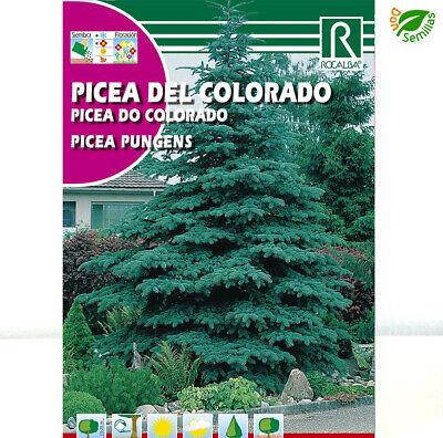Picea del Colorado ( Picea pungens ) 0,5 gr / 100 semillas...