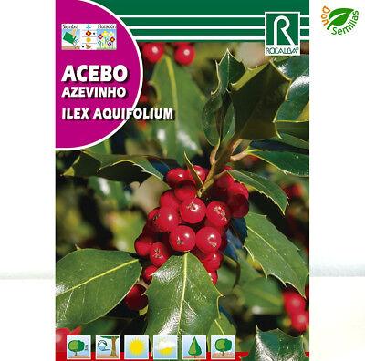 Acebo ( Ilex aquifolium ) 1 gr / 25 semillas apróx -...