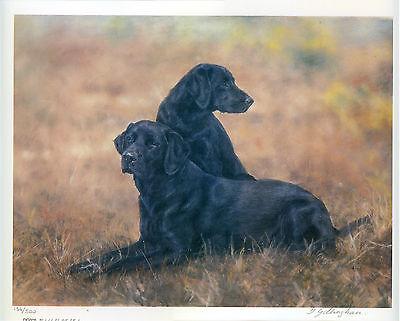 LABRADOR RETRIEVER BLACK LAB GUNDOG DOG FINE ART LIMITED EDITION PRINT