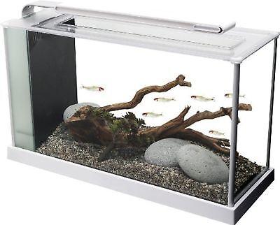 Fluval Spec V Aquarium Kit, 5-Gallon, White