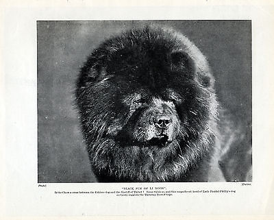 CHOW CHOW HEAD STUDY NAMED DOG LOVELY ORIGINAL PRINT PAGE FROM 1934