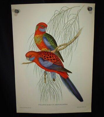 Vintage Sittich Vogelmuster Hullmandel & Walton, J Gould / & H.C.Richter 52763 H&c Vogel