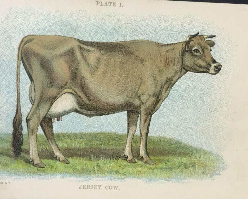 Vintage JERSEY COW LITHOGRAPH Bovine Cattle 1898 RARE Art Print