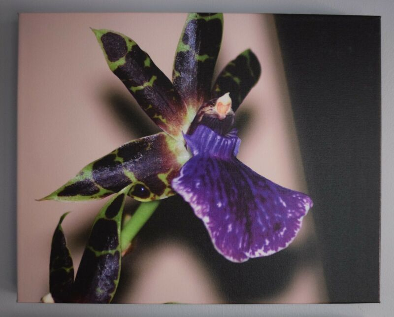 Purple Orchid (on canvas)