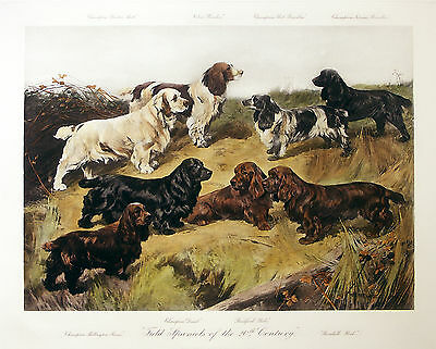 CLUMBER SUSSEX FIELD COCKER SPRINGER SPANIEL DOG PRINT ENGRAVING - ARTHUR WARDLE