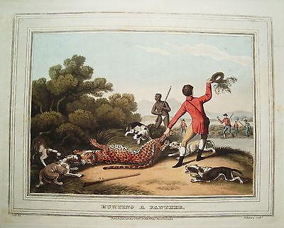 Panther Pantherjagd Afrika Jäger altkolorierter Kupferstich in  Aquatinta 1813