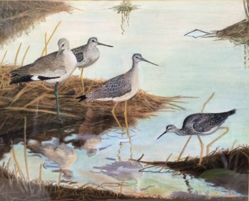 Original Shorebird Painting by J L Reardon of Yellow Legs & Willet, Signed