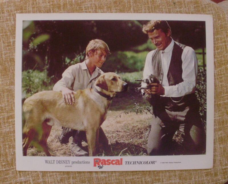 Lobby Card, Rascal, Walt Disney Productions, 1969, Disney, Technicolor