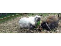 COMPOSTABLE Rabbit Manure / Waste