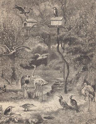 BIRD SANCTUARY BIRD AVIARY WILDLIFE REHABILITATION BIRDS ANTIQUE PRINT 1899