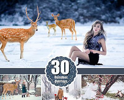 Digital photo frame 30 Real deer