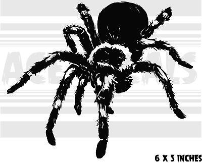 Tarantula - Creepy - Arachnid - Cute - Spider - vinyl decal sticker  - Cute Tarantula