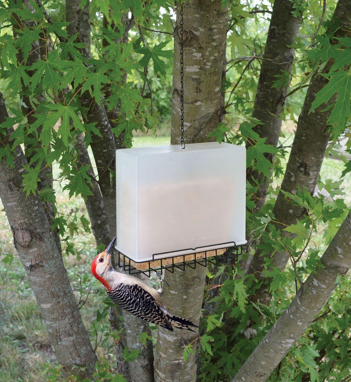 Bird Feeder Large Suet and Seed Cake Saver Birdfeeder !