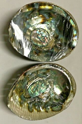 Large Natural Abalone Sea Shell For Smudging or Decoration 2 Pack Free Shipping