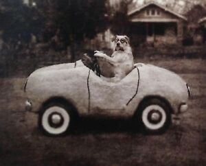 TERRIER JACK RUSSELL FOX  MIXED BREED DOG COMIC ART PHOTO PRINT - In a Toy Car