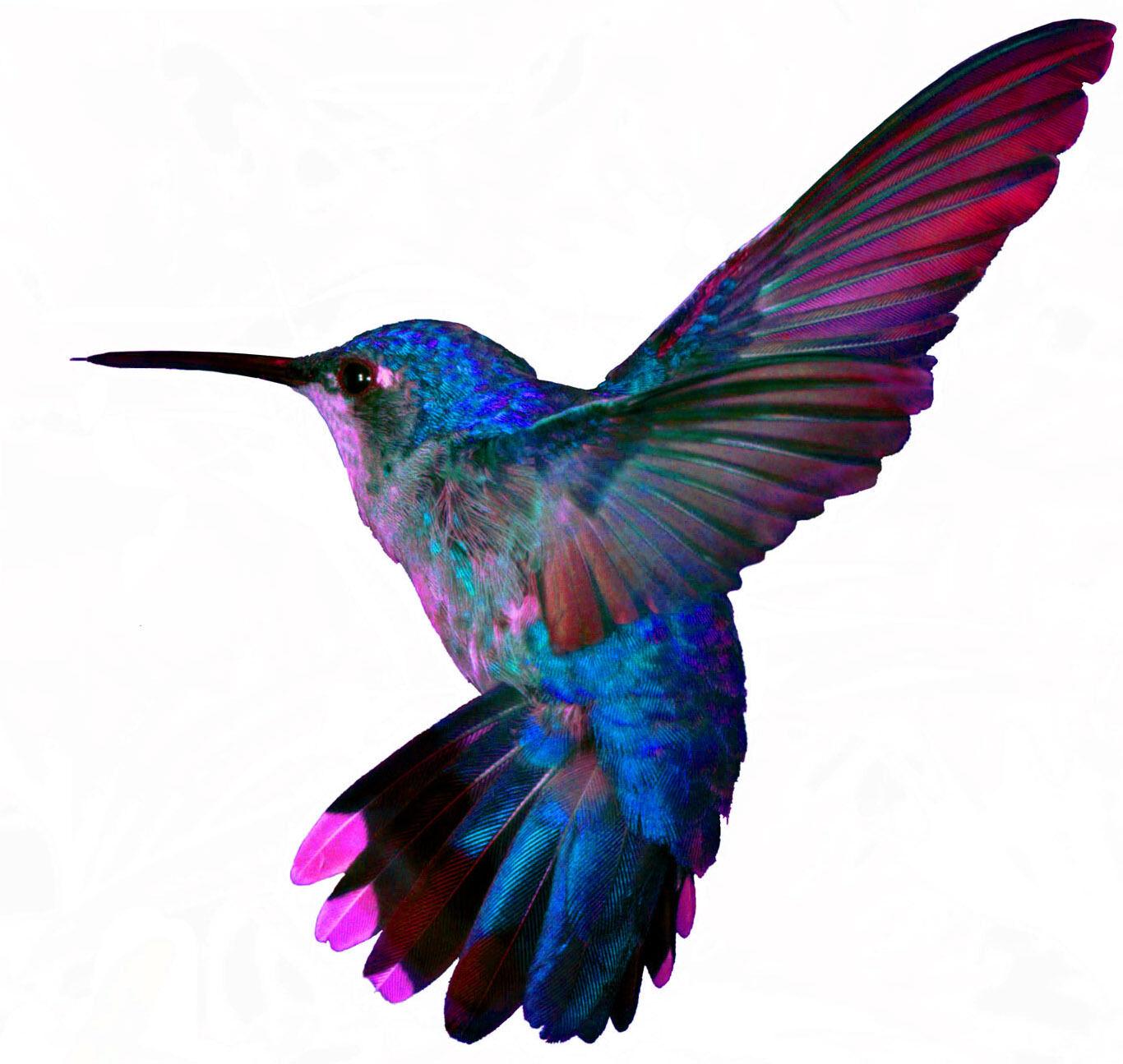 Colibri Emporium