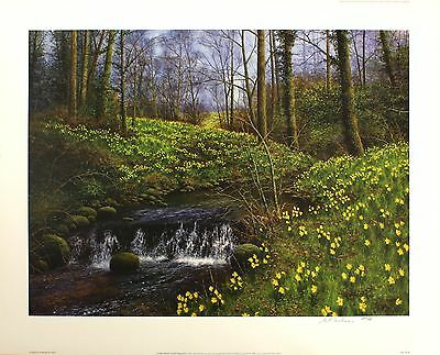 """BILL MAKINSON """"Golden Beck"""" daffodils SIGNED LIMITED ED SIZE:56cm x 70cm NEW"""