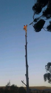 A1 Tree Lopping Service