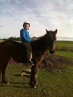 butterscotch 4 year old filly Wangaratta Area Preview