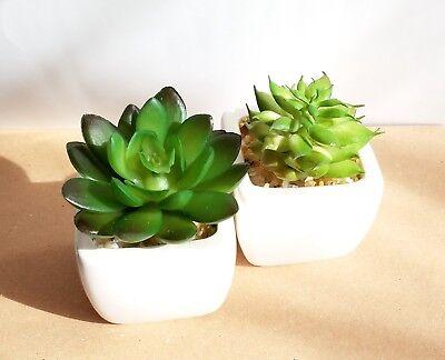 Artificial Succulent Set of 2 in White Ceramic Planter Pot Mini Fake Plant Decor - Artificial Succulent