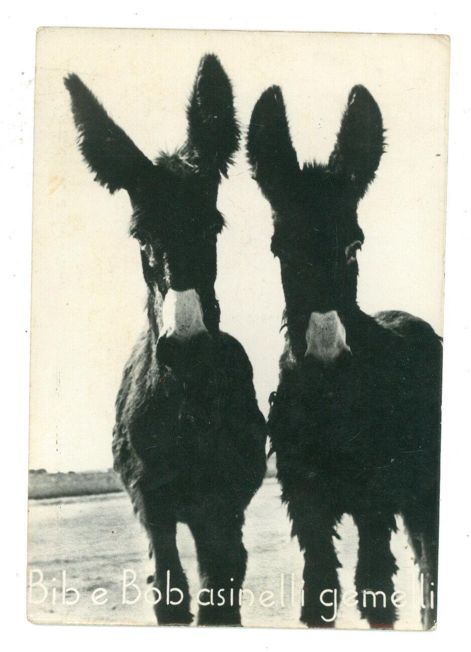 MARTINA FRANCA BIBE E BOB ASINELLI GEMELLI ESEMPLARI ASINI TARANTO PUGLIA 1960