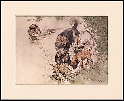 BORDER TERRIER AND OTTERHOUND DOGS LOVELY DOG PRINT MOUNTED READY TO FRAME