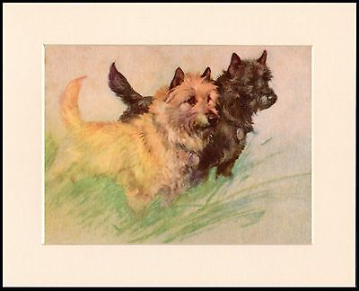 CAIRN TERRIER TWO LITTLE DOGS CHARMING DOG ART PRINT MOUNTED READY TO FRAME