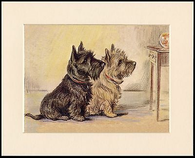 CAIRN TERRIER TWO DOGS WATCH FISH LOVELY MOUNTED DOG PRINT READY TO FRAME
