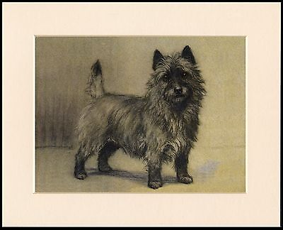 CAIRN TERRIER STANDING DOG GREAT LITTLE MOUNTED DOG PRINT READY TO FRAME