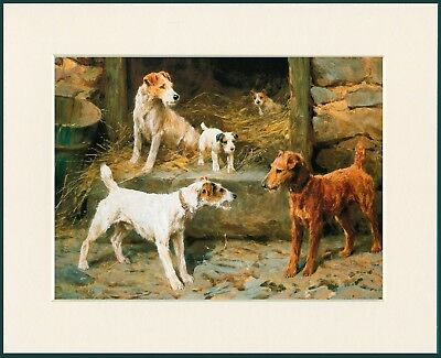 WIRE FOX TERRIER AND IRISH TERRIER GREAT DOG PRINT MOUNTED READY TO FRAME