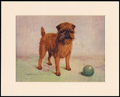 BRUSSELS GRIFFON NAMED CHAMPION DOG CHARMING PRINT MOUNTED READY TO FRAME