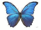 BUTTERFLIES at Cambridge BUTTERFLY Conservatory - Family Tickets Cambridge Kitchener Area image 1