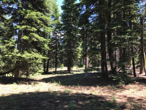 California Land For Sale - Cal Pines Lot .922 Acres With Trees - Modoc County