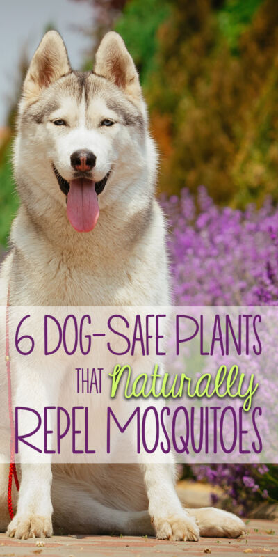 Plants Poisonous to Dogs   Garden Guides