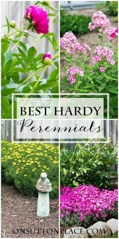 5 More Must-Have Perennials | from On Sutton Place