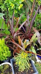 Plant stands .plant pots many plants