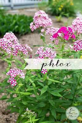 5 More Must-Have Perennials | from On Sutton Place | Phlox