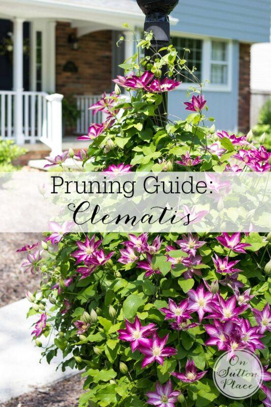 Garden Pruning Guide | Clematis