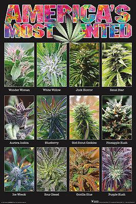 Americas Most Wanted   Weed Poster 24X36   Marijuana Smoking 241408